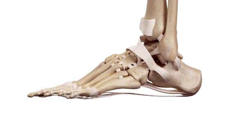 photo anatomique qui décrit la position de chaque os et de chaque ligaments du pied et de la cheville