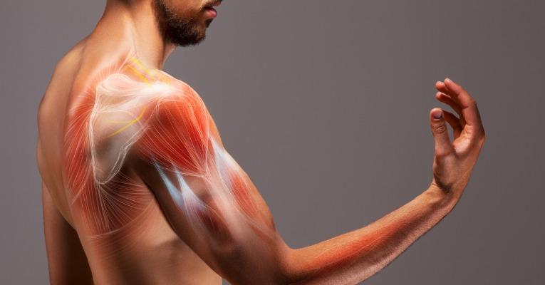 photo d'un jeune homme de profil coude fléchi qui présente l'anatomie musculo-squelettique de son épaule et montre où il peut y avoir des douleurs de l'épaule ou tendinite